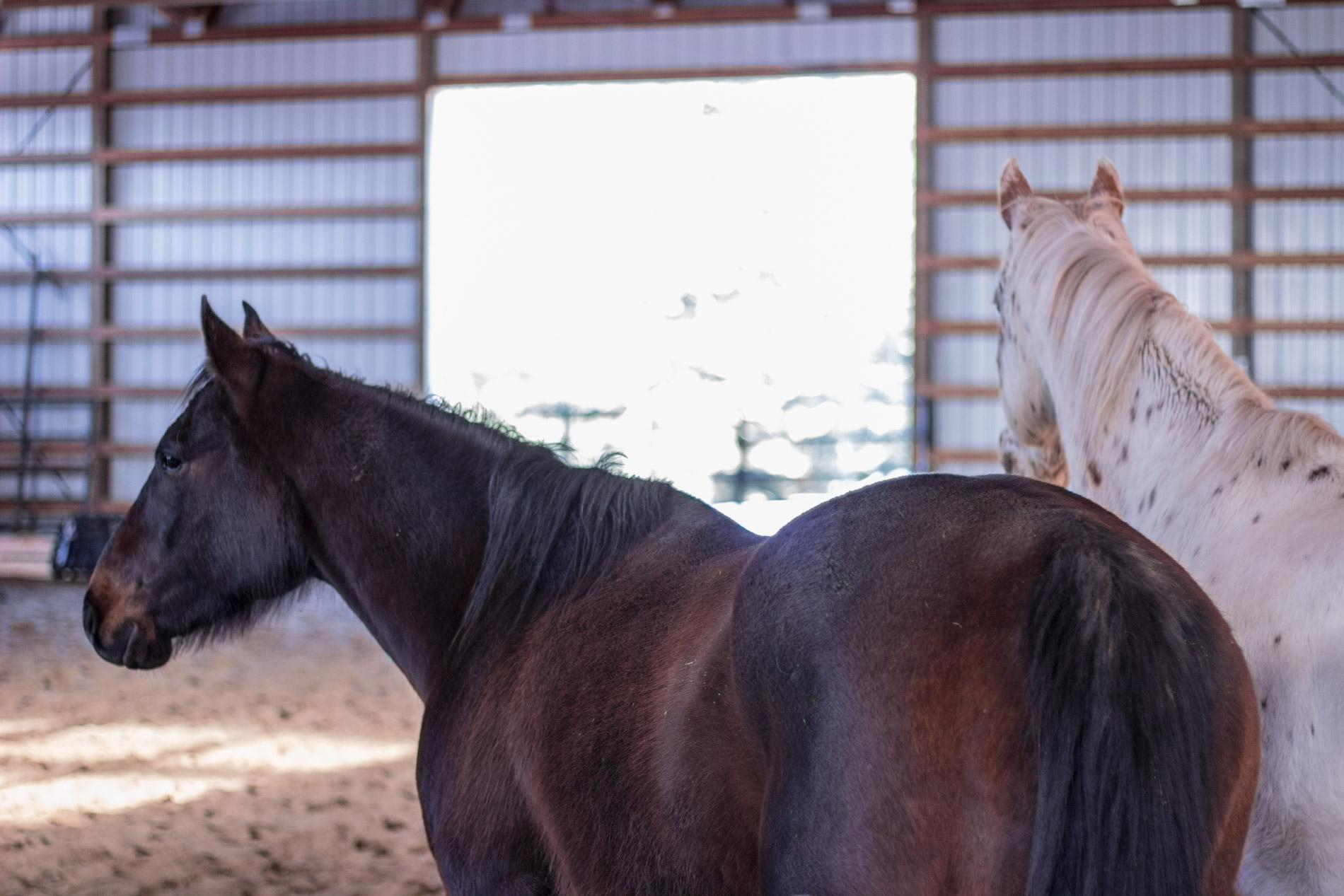 Magnum Western Pleasure Guest Ranch