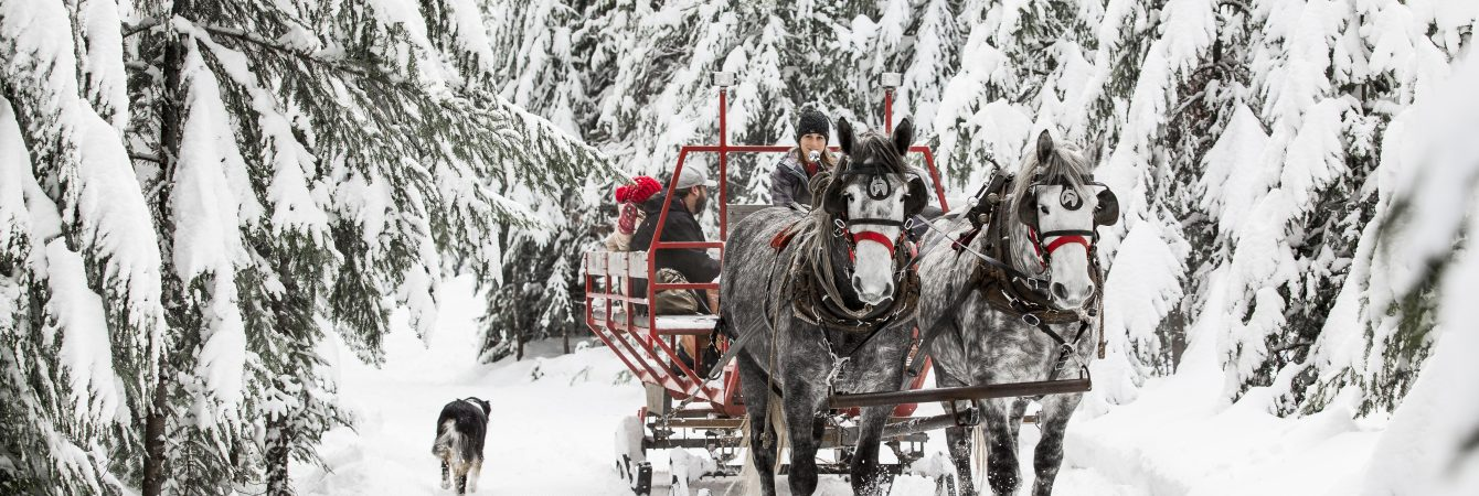 Sleigh Ride through a winter wonderland snow covered forest