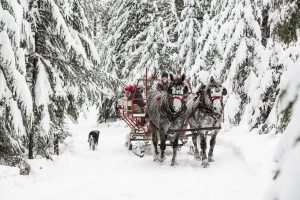 Sleigh Ride through a winter wonderland snow covered forest
