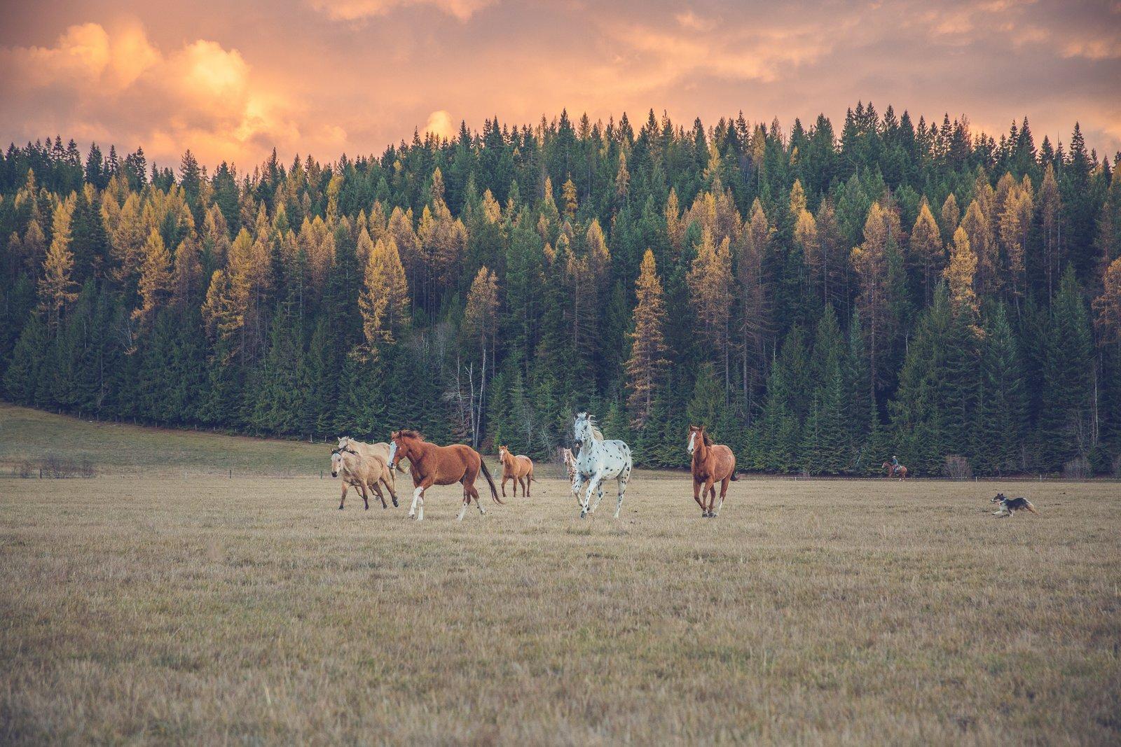 Idaho Vacation