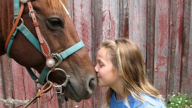 Child kissing horse