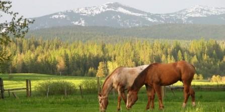 Spring Horseback Promotion