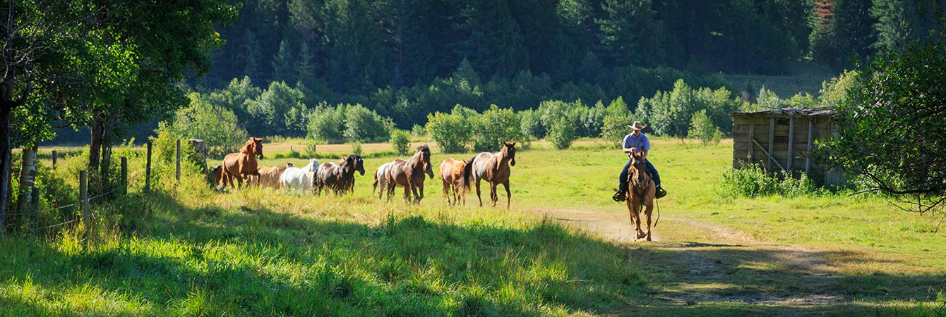 Idaho Guest Ranch Vacation All Inclusive