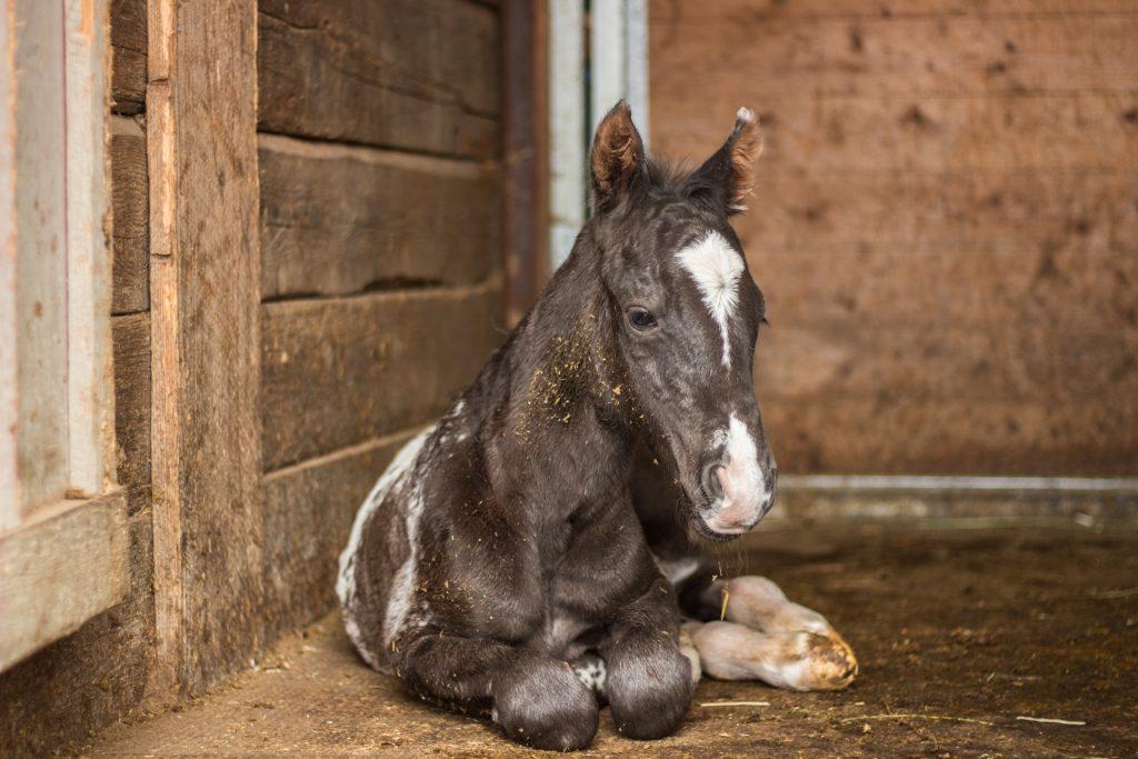 2017 Smart Little Sign Foal