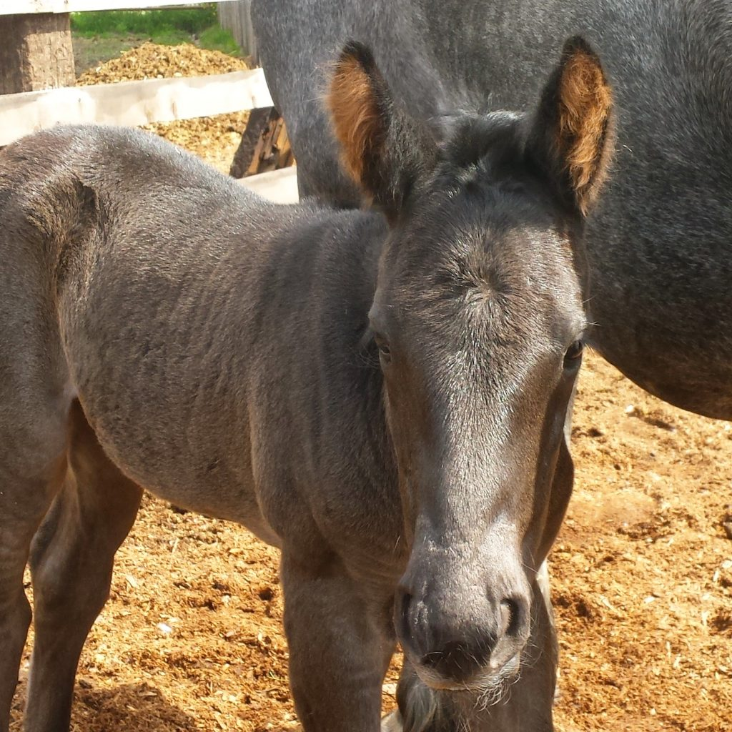 Wonder Woman 2016 Filly at Western Pleasure Guest Ranch