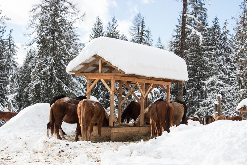 Western Pleasure Guest Ranch Winter Horses