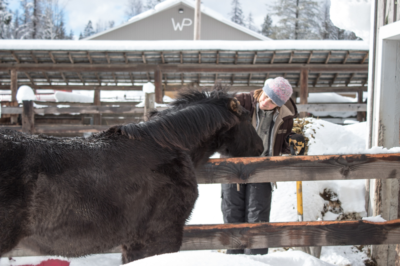 Western Pleasure Guest Ranch Baby Horses