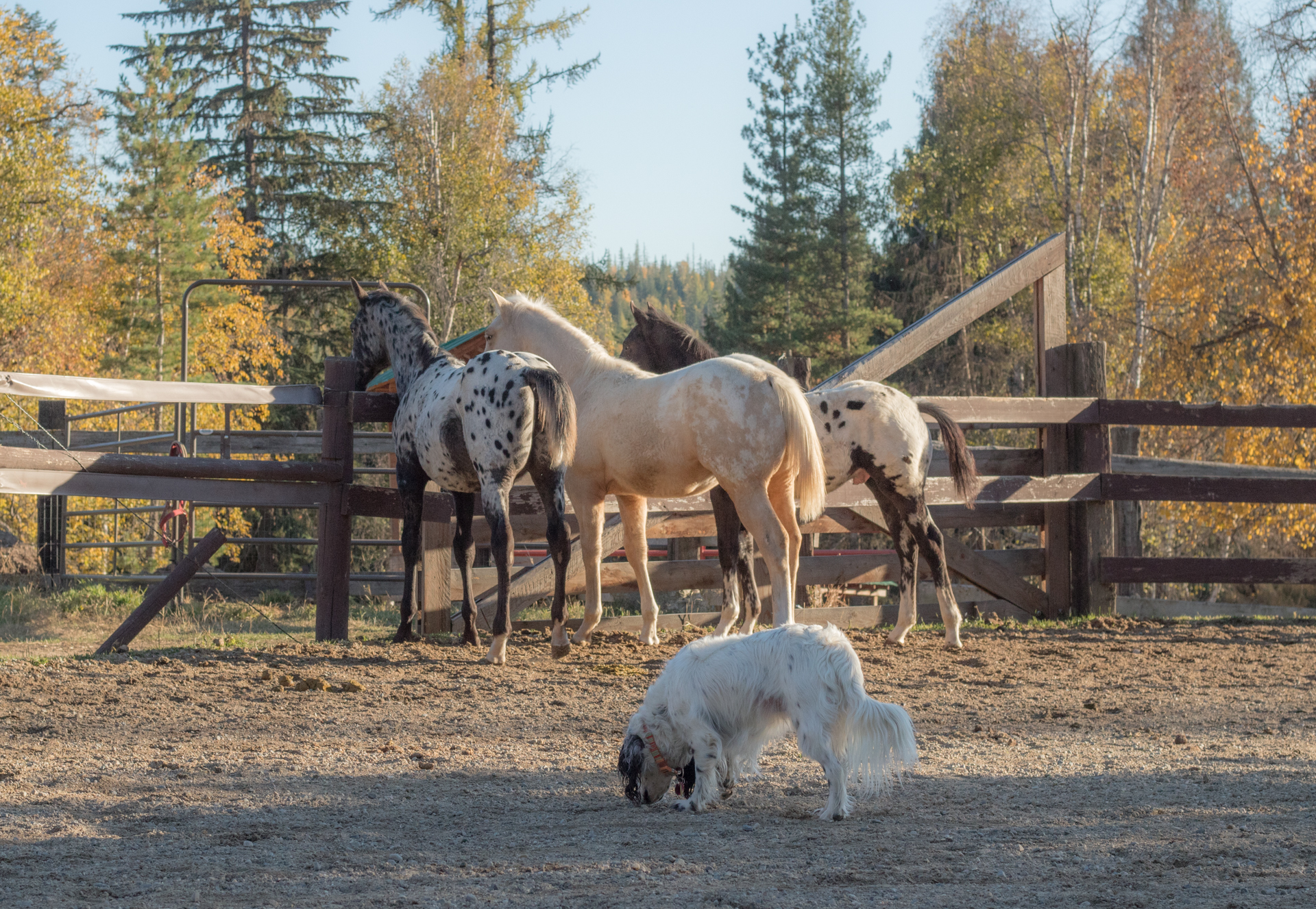 guest ranch vacation horses
