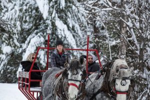 Woman driving a team of grey percheron draft horses on a sleigh ride through the snow Sleigh Ride