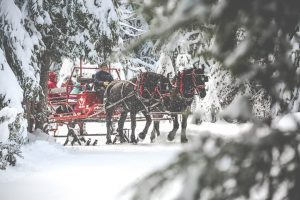 Sleigh ride through the forest with two black horses pulling a red sleigh