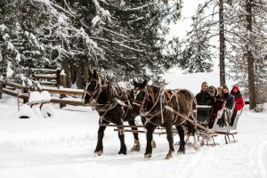 Roley at Western Pleasure Guest Ranch driving a team of two clack draft horses pulling a small black sleigh ride