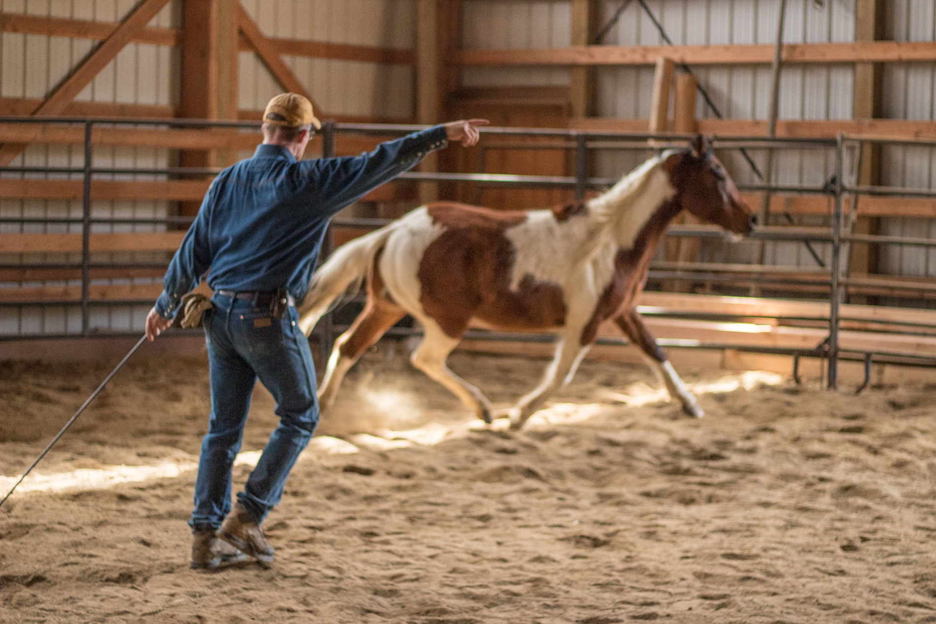 Roley Training Horses
