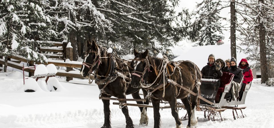 Roley at Western Pleasure Guest Ranch sleigh ride