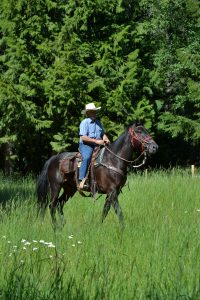 Cowboy riding black horse on a trail ride through forest and tall green grass