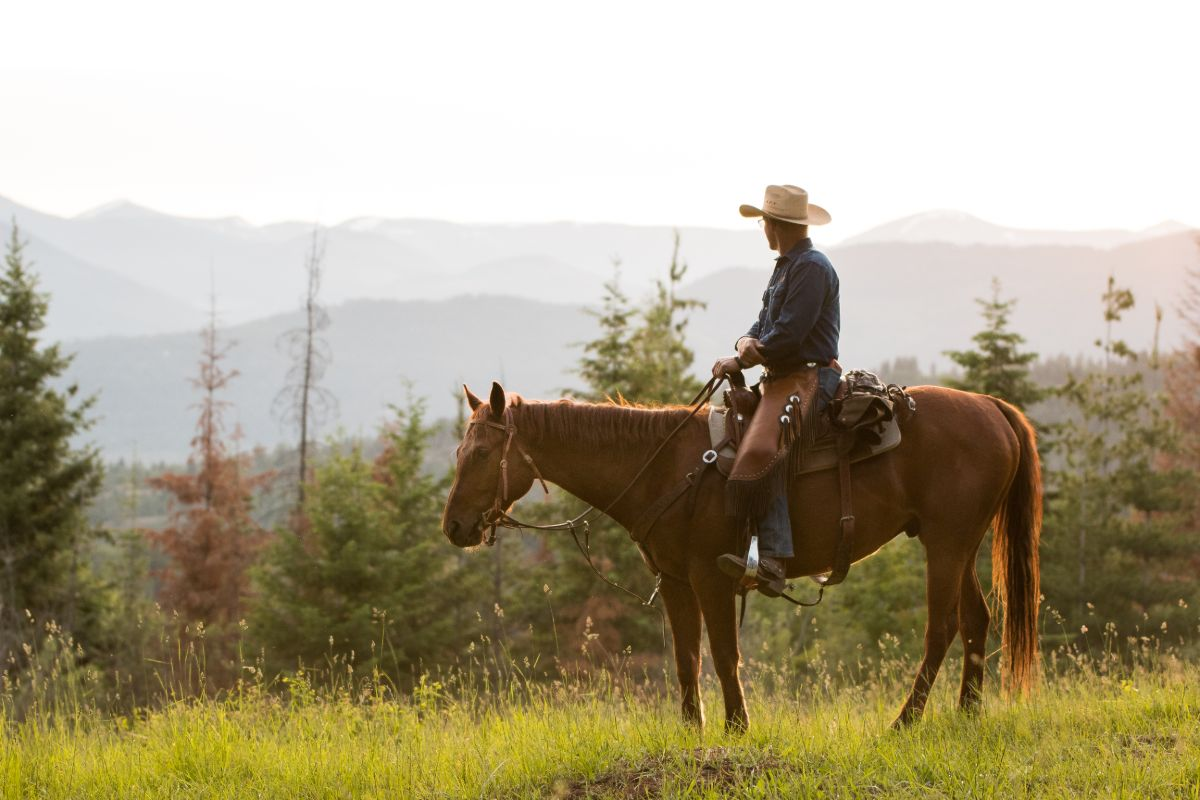 Cowboy riding a Sorrel Quarter Horse Gelding looking out at the mountains and trees