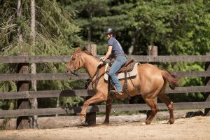 Girl riding a Dun Quarter Horse Gelding in an arena