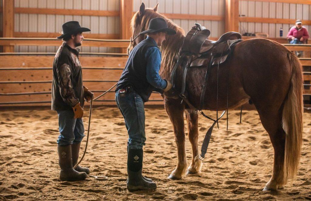 training colts quarter horse half draft