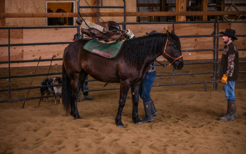 starting colts first time saddling