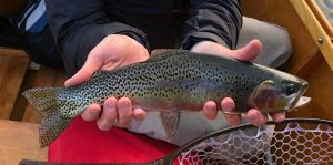 Person's hands holding a trout in fly fishing boat