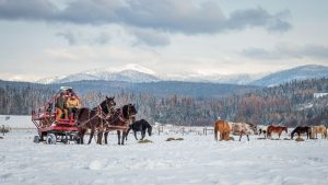 Jake and Julie, bay draft horses pulling a wagon in a snow covered field