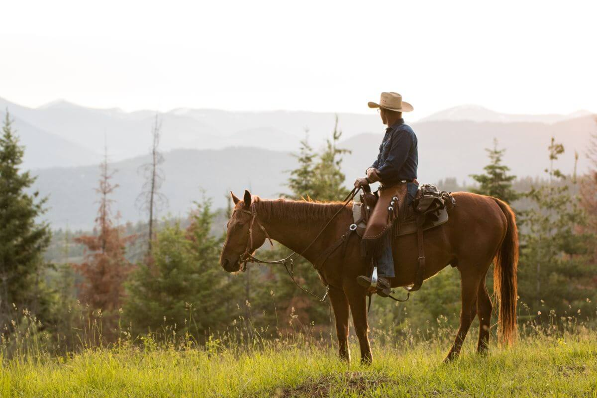 Cowboy sitting on a sorrel horse looking out at the mountains