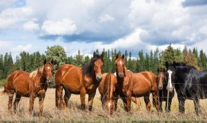 six ranch horses in a field looking over a fence with trees behind and blue cloudy sky overhead