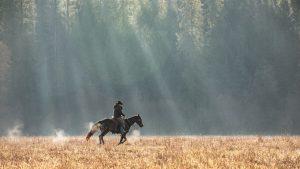 Cowboy riding ranch horse across a field in the Fall with sun rays peaking through the trees