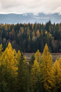 Scenic fall colors on the trees in the Idaho mountains