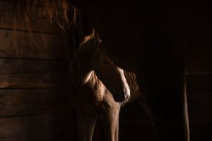 foal in stall with mother with catch light on the baby's nose