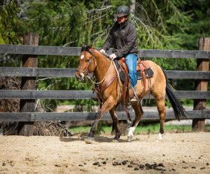 cowboy with helmet on riding buckskin horse in an arena at a dude ranch